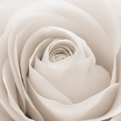 flowers-0000469