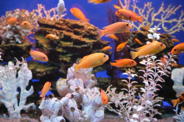 Фотообои ванная аквариум кораллы (underwater-world-00021)