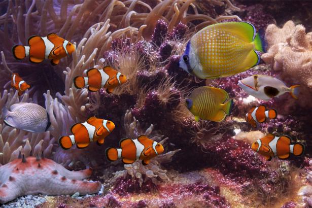 Фотообои для ванны кораллы и рыбки (underwater-world-00058)