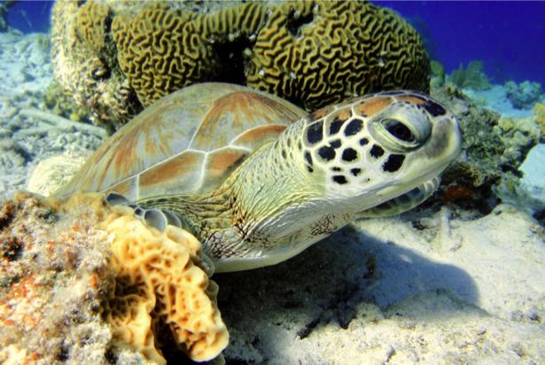 Фотообои в ванную черепаха (underwater-world-00143)