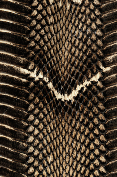Фотообои текстура ядовитой змеи (background-0000296)