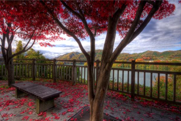 Фотообои парк красное дерево (city-0000051)