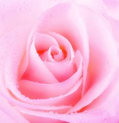 flowers-0000341