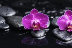 flowers-0000550