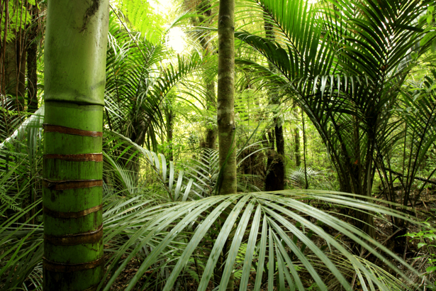 Фотообои бамбук пальмы (nature-00534)