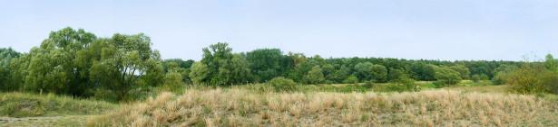 Фотообои панорама леса (panorama_0000023)