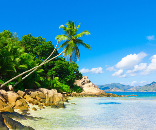 Фотообои пейзаж с пальмами и морем (sea-0000176)