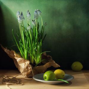Фотообои цветущая лаванда (still-life-0083)