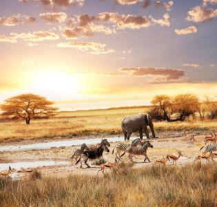 Фотообои с природой саванна (animals-0000091)