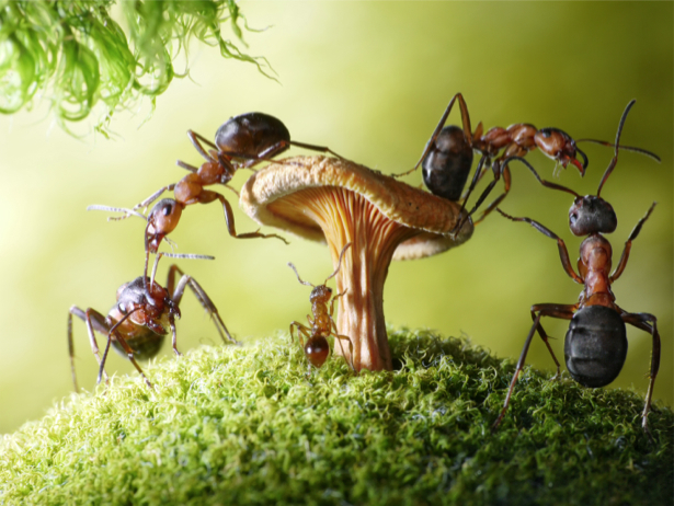 Фотообои муравьи и гриб (animals-0000324)