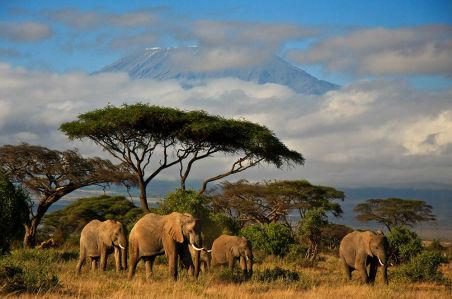 Фотообои Слоны в природе (animals-550)