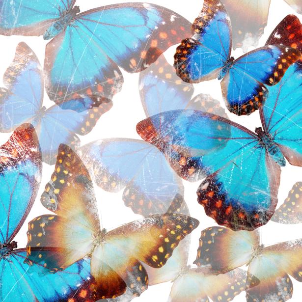 Фотообои бабочки красивые (background-0000109)