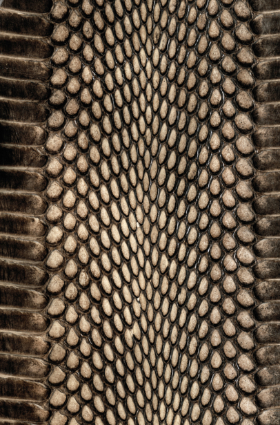 Фотообои текстура змеиная (background-0000295)