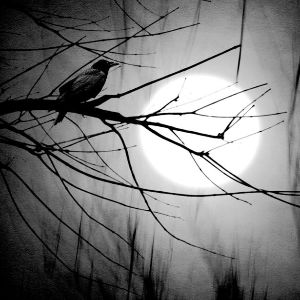 Фотообои черный ворон на ветке (fantasy-0000034)