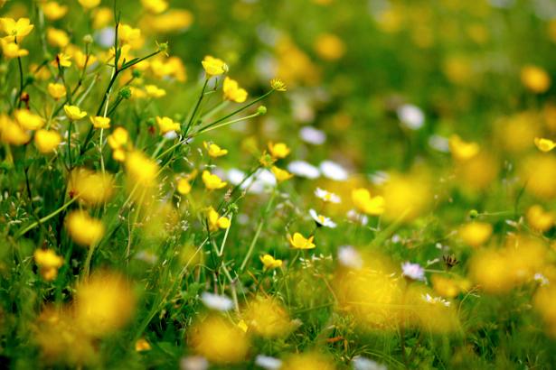 Фото обои Полевые цветы (flowers-0000166)
