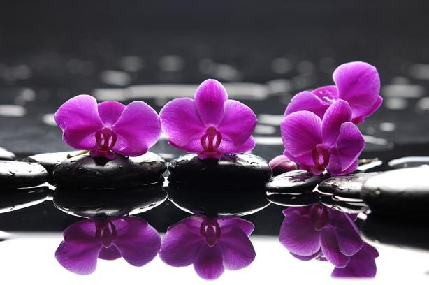 Фотообои Орхидея на камнях (flowers-792)