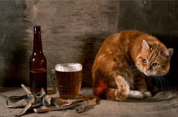 Фотообои для кухни Кот и пиво (food-0000173)