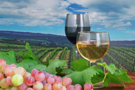 Фотообои на кухне бокал вина (food-0000224)