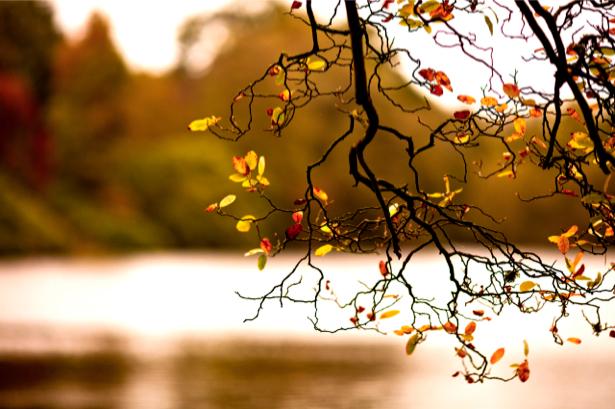 Фотообои виды природы ветка дерева (nature-00067)