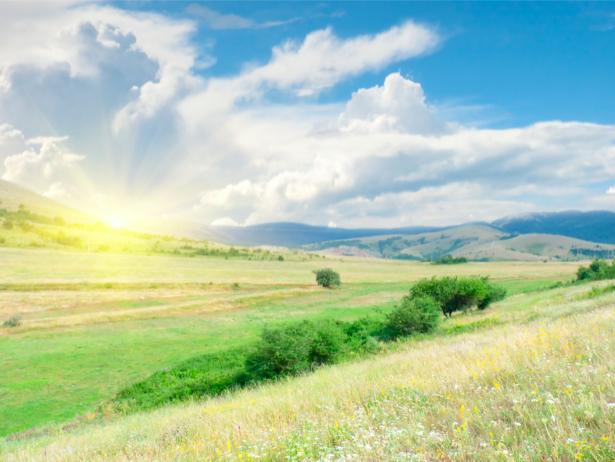 Фотообои природные пейзажи поле (nature-00170)