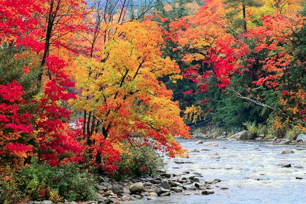 Фотообои вид на горную реку и лес (nature-00234)