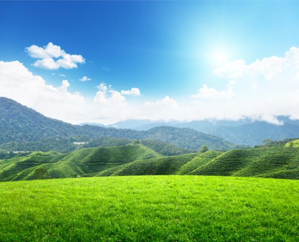 Фотообои поле горы фото пейзаж (nature-00505)