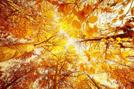 Фотообои осенний лес бархатный сезон (nature-00521)