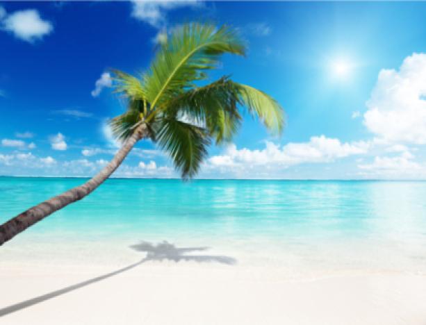 Фотообои море наклонившаяся пальма (sea-0000005)