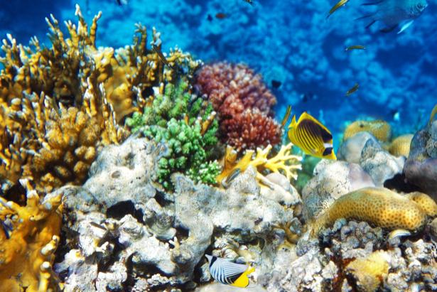 Подводный мир фотообои в ванную (underwater-world-00169)