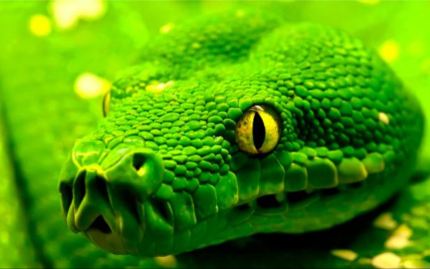 Фотообои зеленая змея, мамба (animals-0000047)