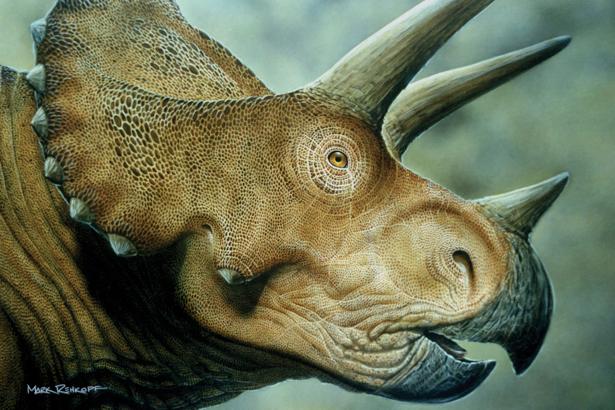 Фотообои 3D динозавр (animals-0000128)