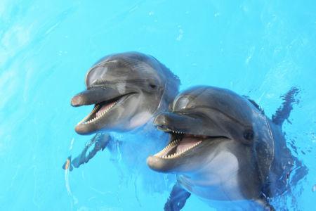 Фотообои дельфины двое (animals-0000298)