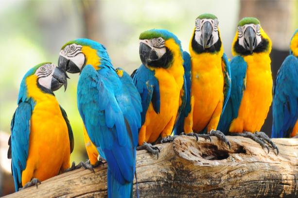 Фотообои попугай ара (animals-0000501)
