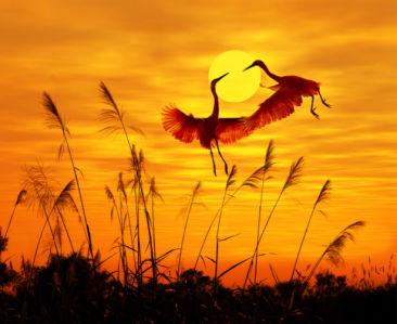 Фотошторы журавли на фоне солнца (bedroom-curtain-00006)
