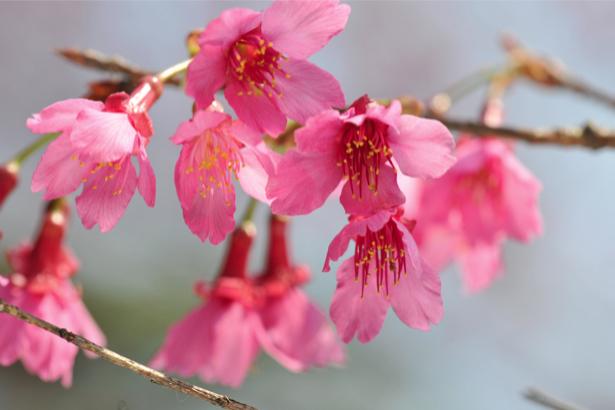 Фото обои цветы Цветущая ветка (flowers-0000022)