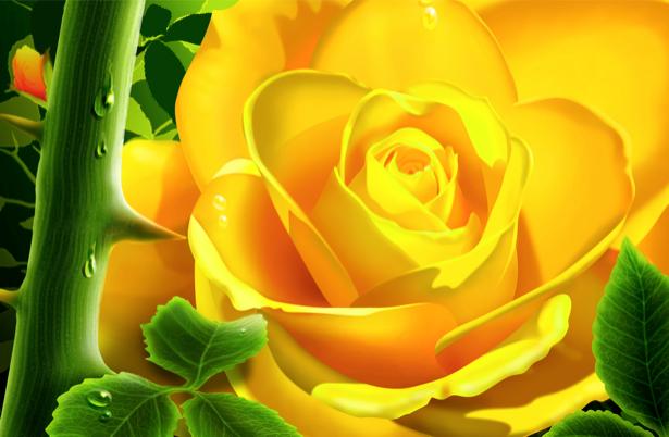 Желтая роза обои на стену цветы (flowers-0000089)