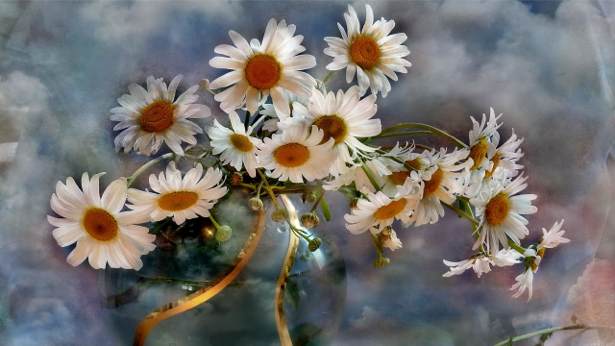 Обои для стен фото Натюрморт с ромашками (flowers-0000137)