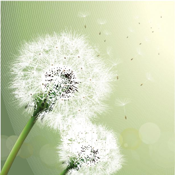 Фото обои цветы Одуванчик (flowers-0000246)
