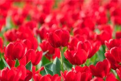 flowers-0000257