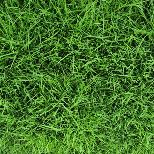Трава сверху - Фото обои на стену (flowers-0000382)