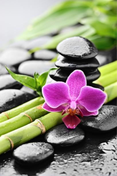 Фото обои на стену Бамбук, камешки и орхидея (flowers-0000403)