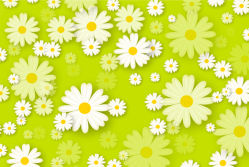 flowers-0000438