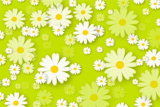 Фото обои для стен поле ромашек (flowers-0000438)