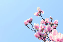 flowers-0000490