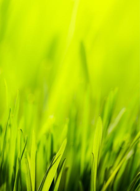 Фото обои для стен трава (flowers-0000588)