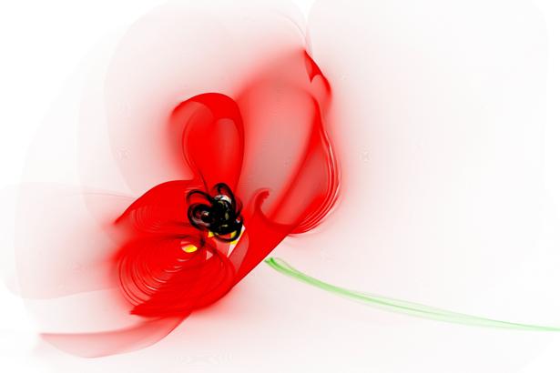 Фото обои для стен Красный тюльпан (flowers-0000600)