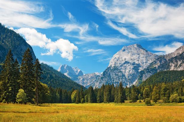 Фотообои горы лес желтая трава (nature-0000650)