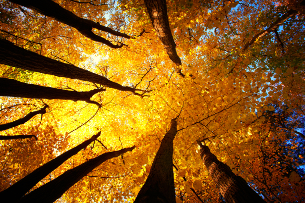 Фотообои осенний лес оранж (nature-0000810)