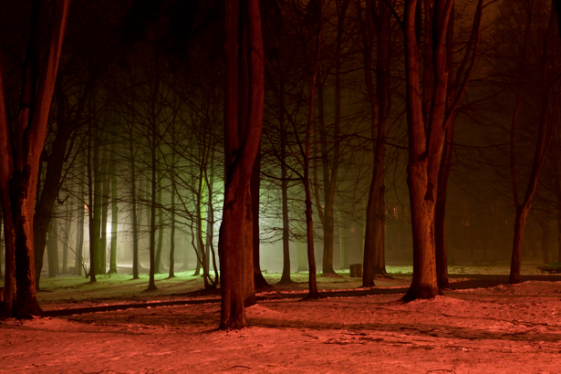 Фотообои ночной лес фото (nature-00271)