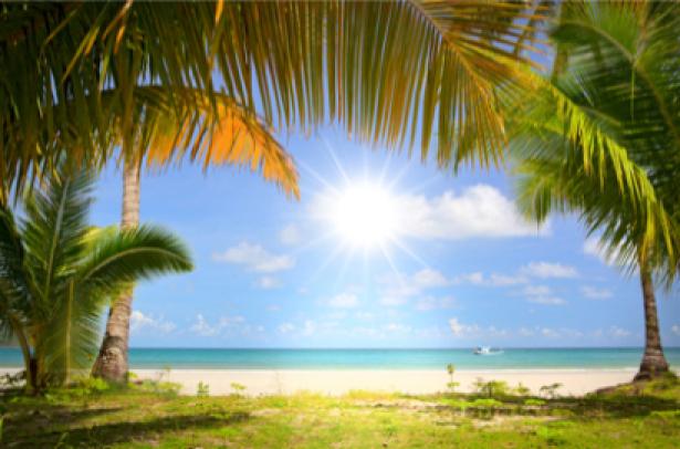 Фото обои море пальмы солнце (sea-0000020)